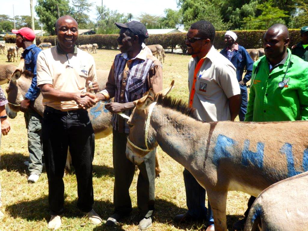 Donating_Donkeys_2