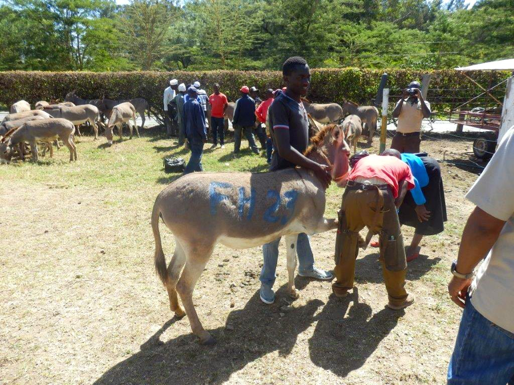 Donating_Donkeys_3