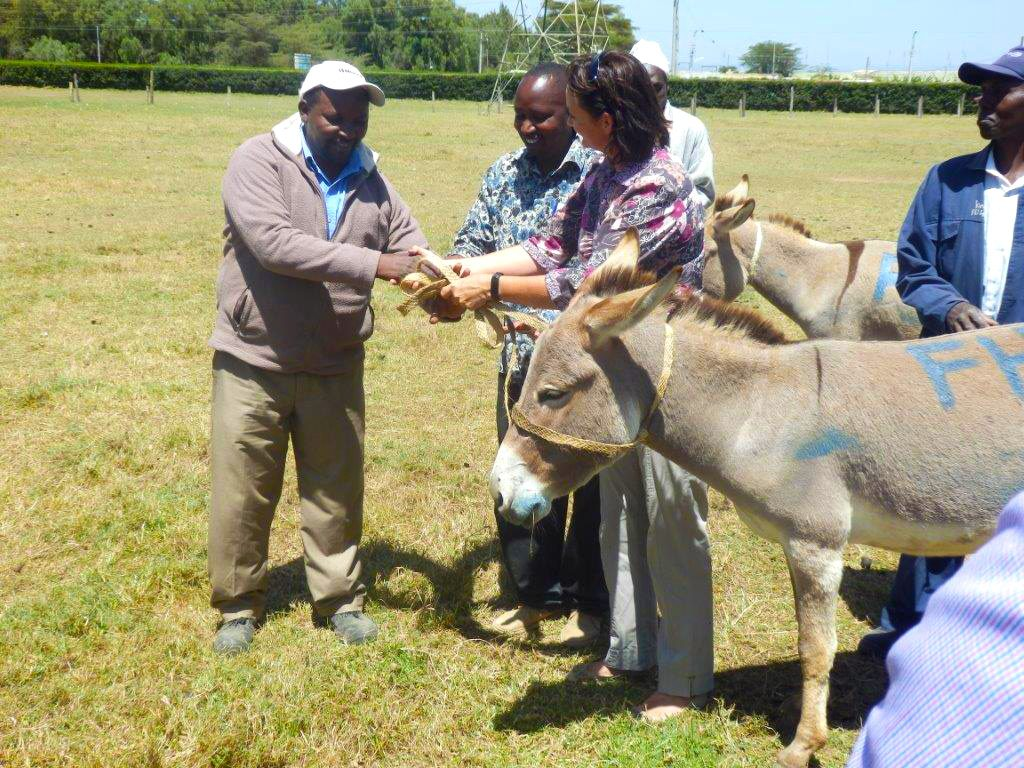 Donating_Donkeys_4